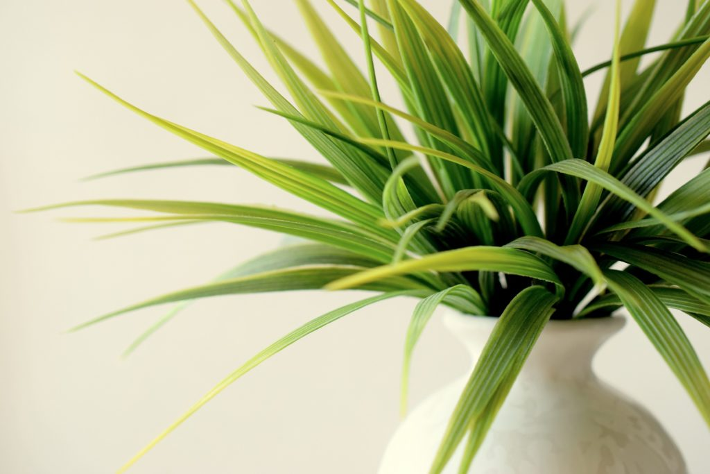 houseplants can clean indoor air.